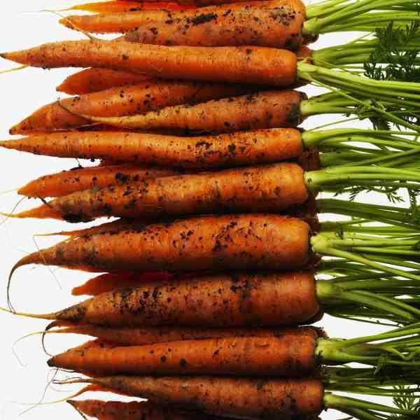 Lurpac_carrot_ 005